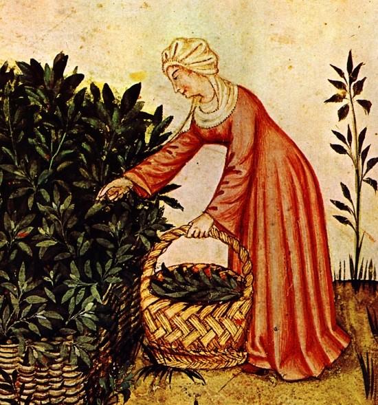 Kobieta zbierająca zioła - iluminacja